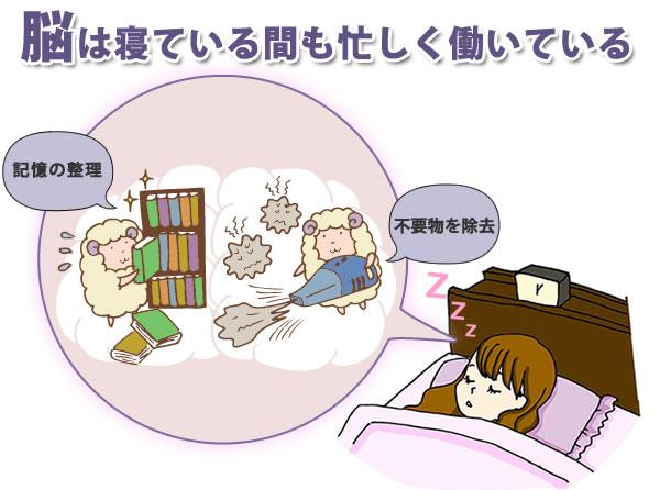 脳は睡眠中に記憶の整理をしている