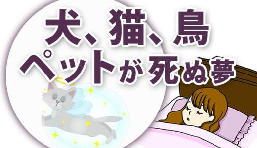 【夢占い】犬、猫、鳥、ペットが死ぬ夢の意味は?動物によって意味が異なる